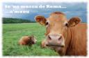 La Mucca de Roma