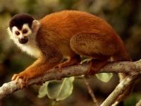 La scimmietta curiosa